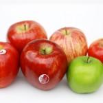 ニュージーランドのリンゴ食べ比べ
