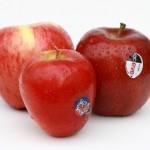 ニュージーランドのりんごの食べ比べno.2