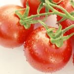 トマトとメタボ効果