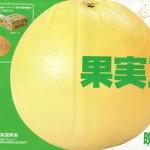 1個で2度おいしいスグレ物!世界最大の柑橘「晩白柚」(レシピ付)