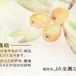 びわは鮮度で味が決まる!「長崎のびわ」(資料)