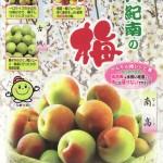 天然しそ漬け / 梅ジュース / 梅干し / 梅ジャムレシピ(資料)