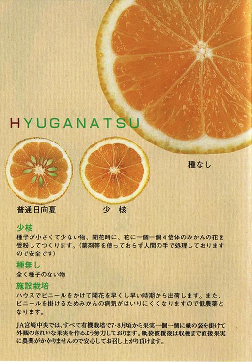 hyuganatsuno1