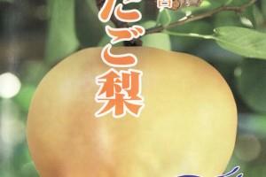 atagonashi0704no1