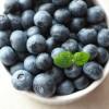 ブルーベリー(基礎知識のまとめ) : Blueberry