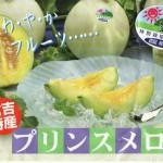 鳥取・倉吉特産のプリンスメロンは減農薬ミルク栽培(資料)