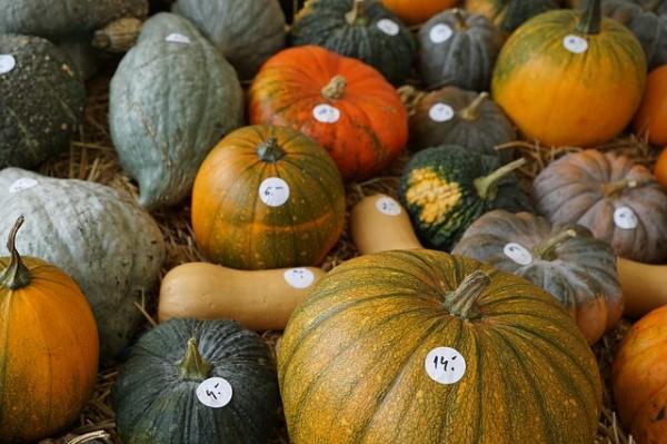 pumpkin-974562_640