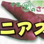 紅あずま(さつまいも) (資料 / レシピ付)