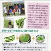 グリーンピースをおいしく食べるポイント3つ&保存方法(資料)