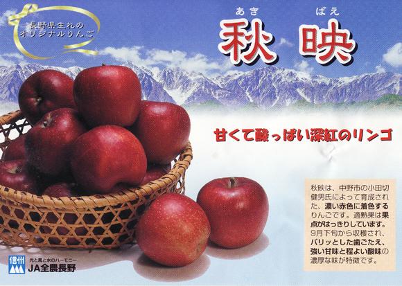 akibae1211no1