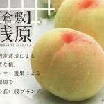 倉敷(浅原)の桃品種8つ(資料)