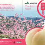 岡山・鴨方で栽培されている桃の品種6つ(資料)