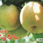 広島・世羅の梨が美味しい理由(資料)