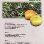 緑色でも甘い柿!?岡山の「太秋柿」がおもしろい(資料)