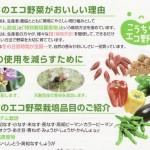 こうちのエコ野菜がおいしい理由!農薬に頼らない「エコシステム栽培」?(資料)