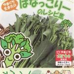 【丸ごと食べられる】はなっこりーレシピ6つ(ベーコン巻き/チャンプルー/白和えetc)(資料 / レシピ付)