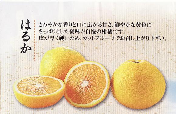 kankitsu0220no2