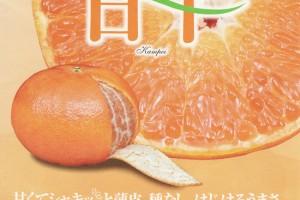 kanpei0211no1