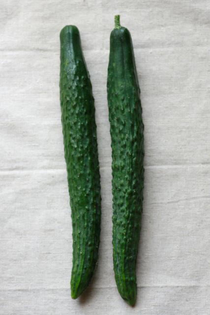 suyokyuuri1