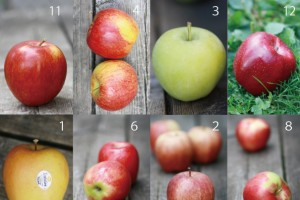 applescollageforblog