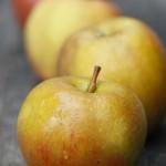 ベル・ドゥ・ボスクープ / Belle de Boskoop Apple