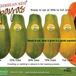 カリビアンレッドパパイヤの切り方 / 見分け方 / Caribbean Red Papaya