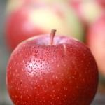 エンパイア / Empire apple