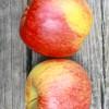 エンビーりんご / Envy apple