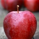 グロスター / Gloster apple