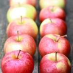 セイリッシュ / Salish apple