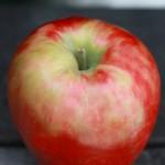 ハニークリスプ / Honeycrisp apple