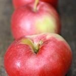 アイダレッド / Idared apple