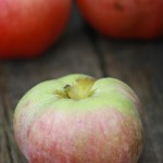 ノーザン・スパイ / Northern Spy apple