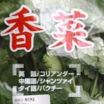コリアンダー(資料) / Coriander / Cilantro