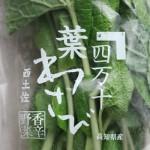 葉わさび(資料 : レシピ) / leaf wasabi