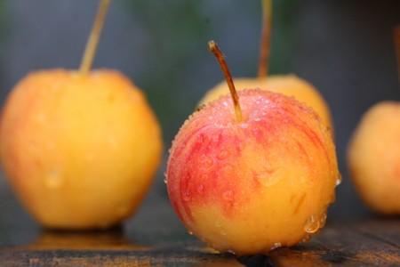 ターシャ・テューダーも愛した「姫リンゴ(クラブ・アップル)」写真まとめ14枚。