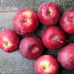 ニューヨーク生まれの真紅のりんご!リバティー(Liberty Apple)まとめ