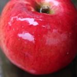 オハイオ生まれのりんご!メルローズ(Melrose Apple)まとめ