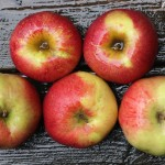ニューヨーク生まれのりんご!スピゴールド(Spigold Apple)まとめ
