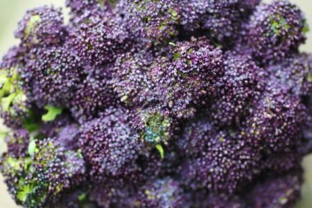 茎まで丸ごと食べられる「紫スティックブロッコリー」写真まとめ6枚