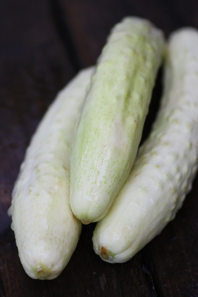 whitecucumber0719no1