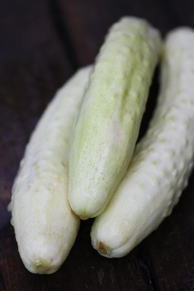 whitecucumber0719no1