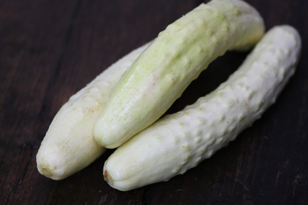 whitecucumber0719no4