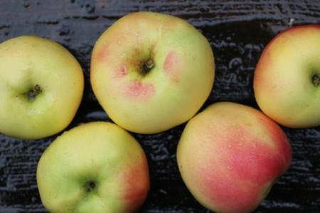 インディアナ州出身のバナナ?りんご?ウィンターバナナ(Winter Banana Apple)まとめ