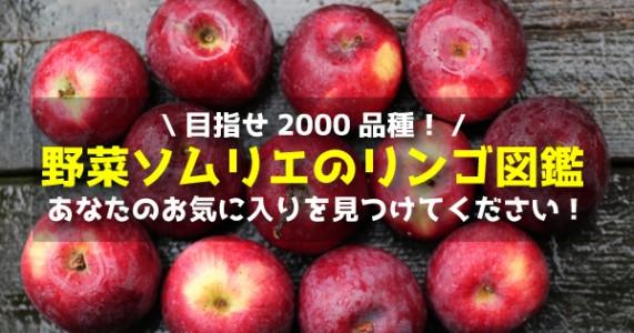 【目指せ2,000品種】野菜ソムリエのリンゴ図鑑!あなたのお気に入りが見つかる!