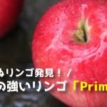 耐病性の強いリンゴとして生まれた「プリマ(Prima)」まとめ。