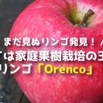 かつては家庭果樹栽培の王者?オレンコ(Orenco)りんごまとめ
