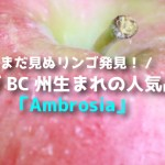カナダBC州生まれの人気品種!アンブロシアりんごまとめ(Ambrosia apple)