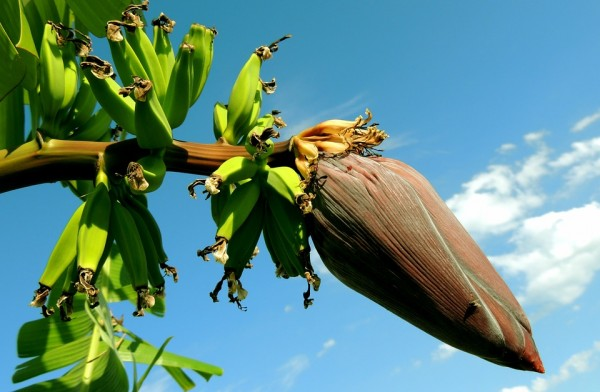 banana-256521_960_720