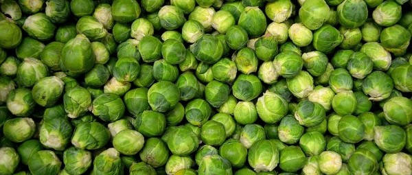 brussels-sprouts-22009_960_720